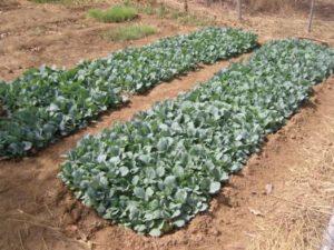 Laro Farm
