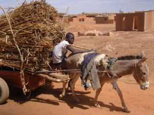 Donkey cart carrying straw